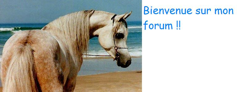 Les chevaux Index du Forum