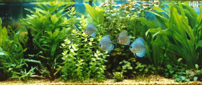 AquaBourbon974 Index du Forum