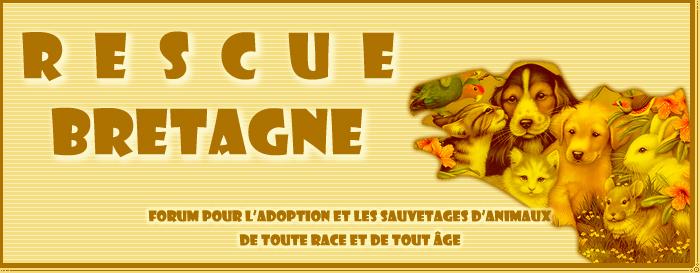 logo rescue bretagne