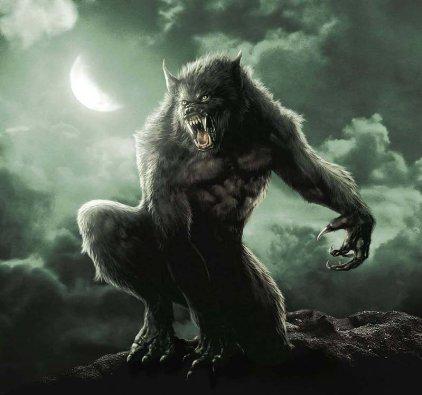 Wonder Wolves Warriors Index du Forum