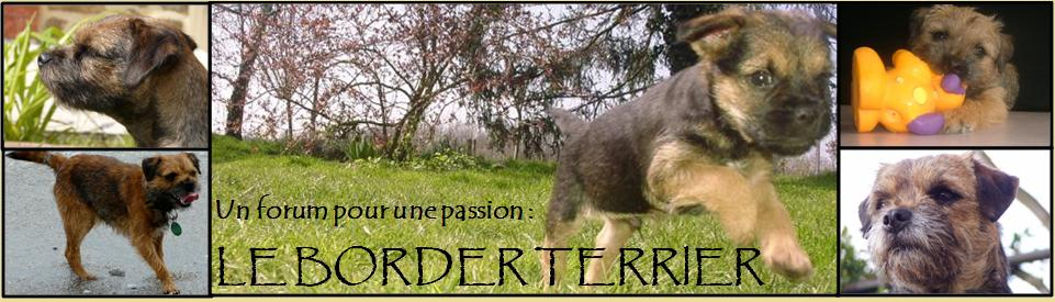 LE FORUM DES BORDER TERRIERS Index du Forum
