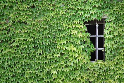 forum un jardin blanc dans l 39 oise page 13 jouy. Black Bedroom Furniture Sets. Home Design Ideas